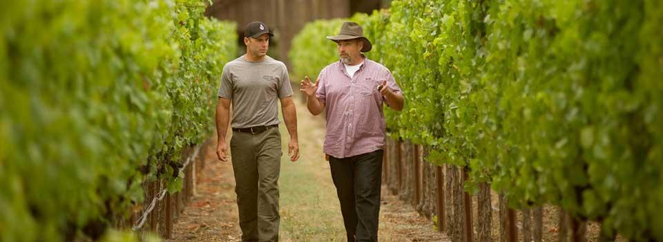 working in the vineyard